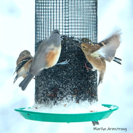 300-square-wintergarden-birds-october-snow-bids_103020_0018
