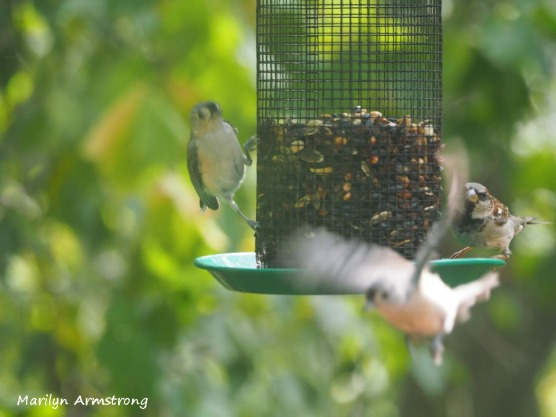 300-three-birds-one-flying-9-14_091420_011