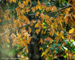 300-yellow-aspen-fall-9-29_092820_026