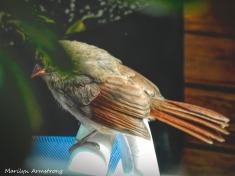 180-Orange-Cardinal_092220_016