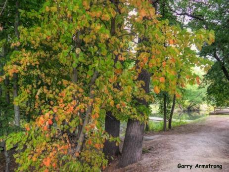 180-Path-Gar-Fall-River-Bend_092420_0098