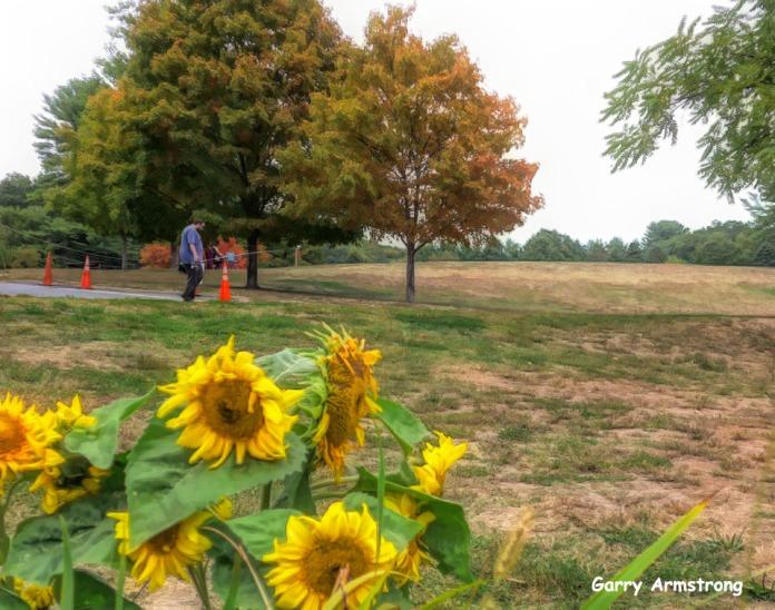 180-Sunflowers-Gar-Fall-River-Bend_092420_0024