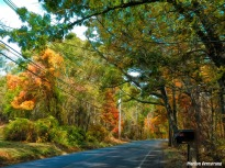 180B-Golden-October-Foliage_101920_123