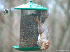 300-incoming-chickadee-and-red-squirrel_112220_0136