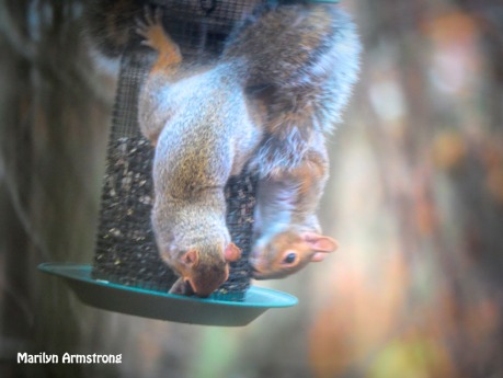 300-is-it-love-squirrels-111120_0070