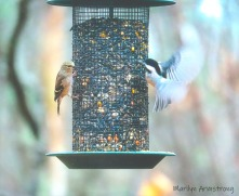 300-nuthatch-finch_112220_0144