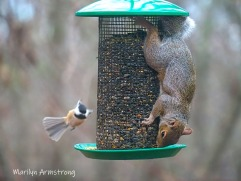 300-nuthatch-and-red-squirrel_112220_0150