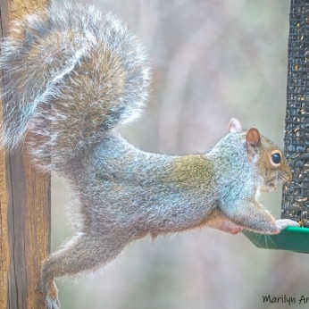 300-red-squirrel_112220_0024