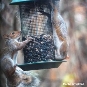 300-square-pair-squirrels-111120_0064