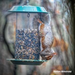 300-square-squirrel-2_111320_0005