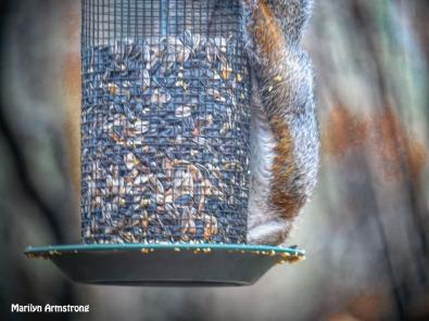 300-squirrel-2_111320_0026