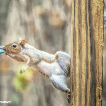 300-stretchy-squirrel-111120_0061