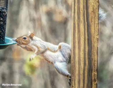 300-stretchy-squirrel-111120_0061