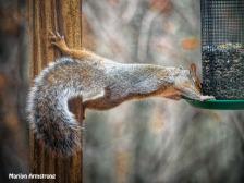 300-stretchy-squirrels-111120_0083