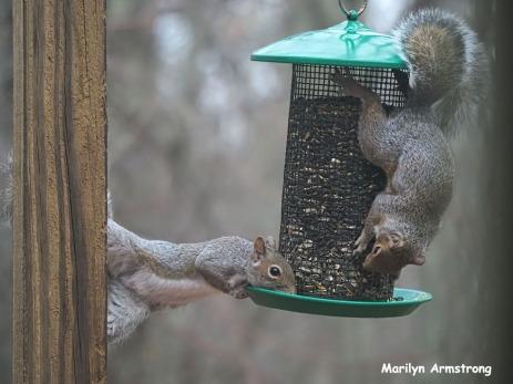 300-trapeze-squirrels_112220_0136