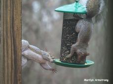 300-trapeze-squirrels_112220_0137