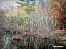 180-Winter-Trees-Blackstone-RI-GAR_121120_0072