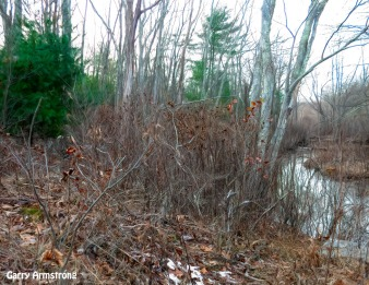 180-Winter weeds-Blackstone-RI-GAR_121120_0031