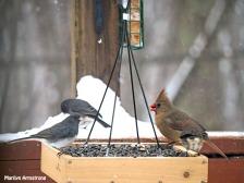 300-2-juncos-orange-cardinal-snow-flat-feeder_121720_0065