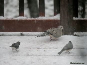 300-birds-in-snow_120520_0064