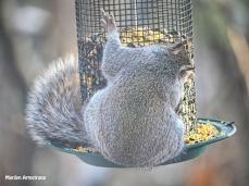 300-fat-squirrel-a_120720_0001