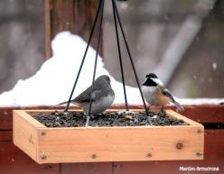 300-snow-junco-chickadee-flat-feeder_121720_0039