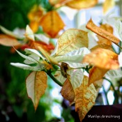 300-square-poinsettia-new-growth_122120_0003