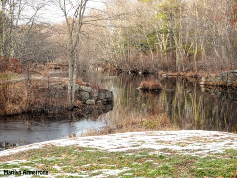 300-winter-foliage-blackstone-ri-mar_121120_0010