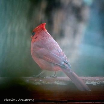 300-2-square-cardinal_sarurday_010221_0008