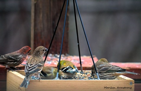 300-new-finch-food_011121_0038