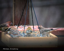 300-new-food-for-finches_011121_00034b