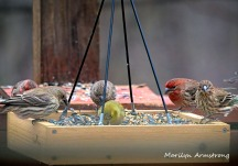 300-new-food-for-finches_011121_0006