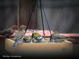 300-new-food-for-finches_011121_0038