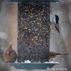 300-square-birds-cardinals-snow_012621_0082