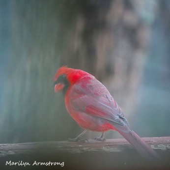 300-square-cardinal_saturday_010221_0004