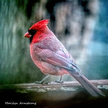 300-square-cardinal_saturday_010221_0007