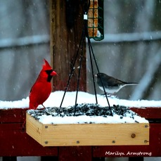 300-square-cardinals-snow_012621_0042