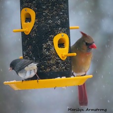 300-square-cardinals-snow_012621_0081.