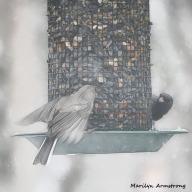 300-square-conversationi-snow-birds_012621_0208