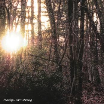 300-square-golden-light-sunset-in-january_011621_0008