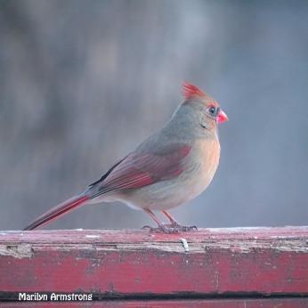 300-square-odd-color-cardinal_013021_0028