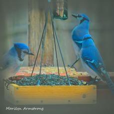 300-square-three-blue-jays_011221_0009