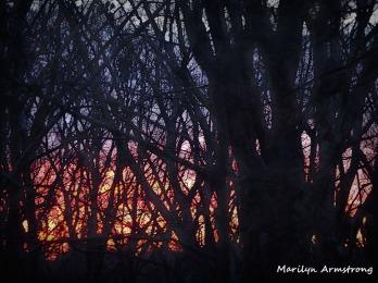 300-4:30am-sunrise-21-january_012021_0006