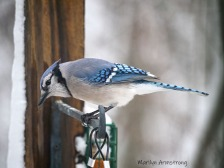300-blue-jays-snow_020321_0012