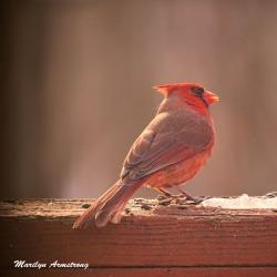 300-cardinal_020621_0037