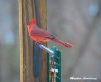 300-cardinal_020621_0040