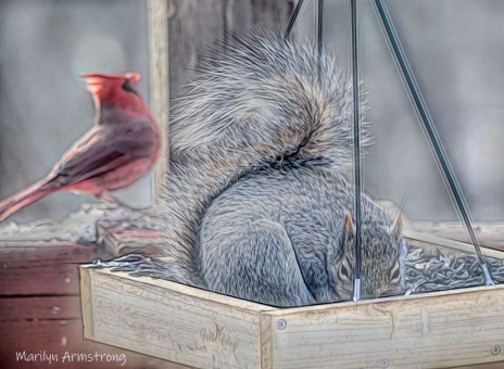 300-fur-feathers_020621_0060