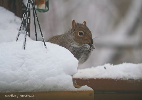 300-hungry-squirrel_020221_0010