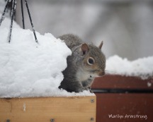 300-hungry-squirrel_020221_0027