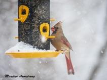 300-lady-cardinal_more-snow_020721_0064